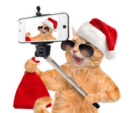 Cat in red Christmas hat taking a selfie together with a smartphone. Royalty Free Stock Images