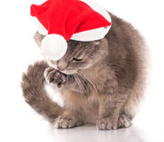 Cat in a red Christmas hat on white Royalty Free Stock Photos