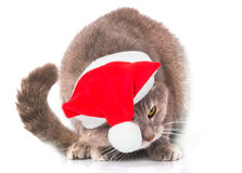 Cat in a red Christmas hat on white Stock Photo