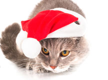 Cat in a red Christmas hat on white Stock Image
