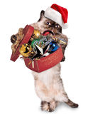 Cat in red Christmas hats with gift royalty free stock photo