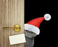 Cat in red christmas santa claus hat looking out the door entrance at home with empty card. Isolated on black Stock Photography