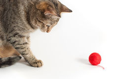 Cat and red clew Stock Photos