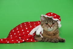 Cat in a red dress. Cat in a red dress on a green background Stock Photography