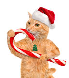 Cat in red hat holds a Christmas candy. Stock Image