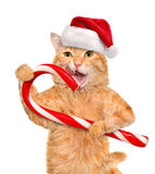 Cat in red hat holds a Christmas candy. Royalty Free Stock Photography
