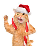 Cat in red hat holds a Christmas candy. Stock Photo