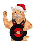 Cat in red hat holds a vinyl record . Stock Photos