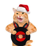 Cat in red hat holds a vinyl record . Stock Photography