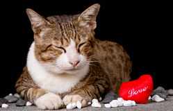 Cat with red heart shaped love. Picture of Cat with red heart shaped love Stock Photo