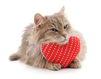 Cat and red heart. Royalty Free Stock Photo