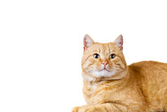 Cat red Royalty Free Stock Photo