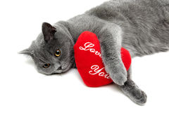 Cat and red pillow on a white background Royalty Free Stock Images