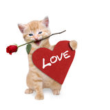 Cat with a red rose and red heart. Love Stock Images