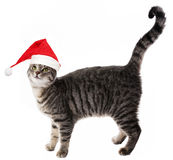 Cat with red santa cap Royalty Free Stock Photo