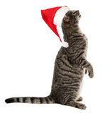 Cat with a red santa cap Royalty Free Stock Photography