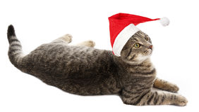 Cat with a red santa cap Stock Image