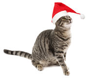 Cat with a red santa cap Stock Photography