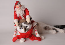 Cat in red scarf with Santa Claus on a light background. Blue eyed cat wearing red scarf with Santa Claus on a light background Stock Photography