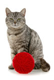 Cat with red skein of yarn Royalty Free Stock Photos