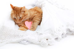 Cat red sleeping in bride marriage white dress Royalty Free Stock Photos
