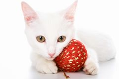 Cat with red toy Royalty Free Stock Photography