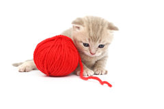 Cat and red wool ball Royalty Free Stock Photo