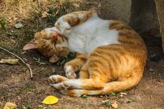 Ginger cat, yard, homeless sleeping in the summer