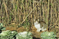 Cat in the reed Stock Images