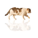 Cat reflection Stock Photo