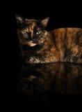 Cat Reflection Stock Photos