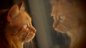 Cat Reflections Fotografia Stock