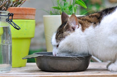 Cat refreshing Royalty Free Stock Image