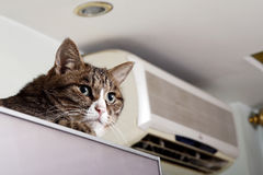 Cat on the refrigerator. In summer,a lovely cat climbed on the refrigerator Stock Images