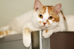 Cat on the refrigerator. stock photos