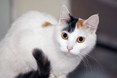 Cat on the refrigerator. Royalty Free Stock Photography