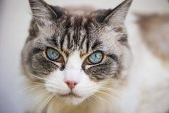 Cat& x27 ; regard de s photo stock