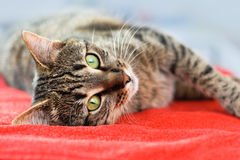 Cat relax Stock Images