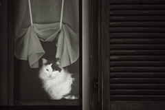 Cat in relax Stock Photos