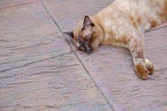 Cat Relax On The Floor preciosa Imagen de archivo