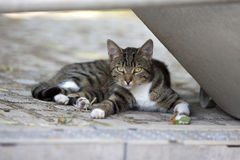 Cat relax outside and watch  at camera Stock Images