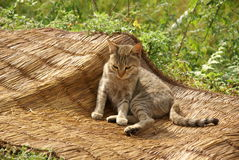 Cat relaxed on straw woven hand-made blanket stock photos