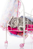 Cat relaxes in doll bed Stock Photos