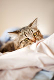 Cat relaxes and dreams Stock Photos