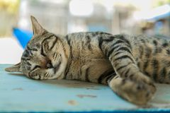 Cat relaxes on the wooden table. Cute catat relaxes on the wooden table Royalty Free Stock Photo
