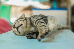 Cat relaxes on the wooden table. Cute catat relaxes on the wooden table Stock Photography