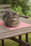 Cat relaxing Royalty Free Stock Images