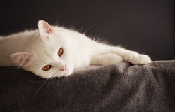 Cat relaxing Stock Photos