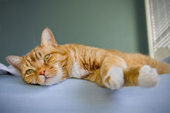 Cat relaxing on bed. Orange colored tabby cat relaxing on the edge of a bed Stock Photos