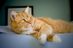 Cat relaxing on a bed Royalty Free Stock Images